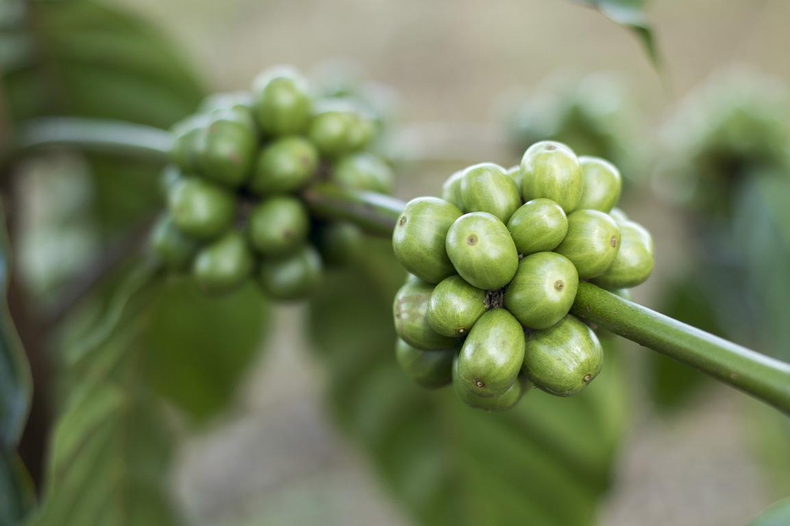 Kaffeebohnen als Symbol für Impressum